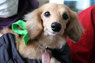 f:id:animal_protections:20120313010208j:image