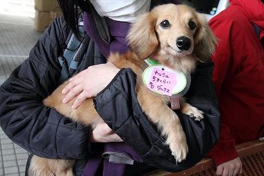 f:id:animal_protections:20120313010209j:image