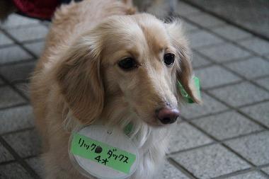 f:id:animal_protections:20120313010217j:image