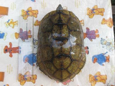 f:id:animal_protections:20120402223953j:image