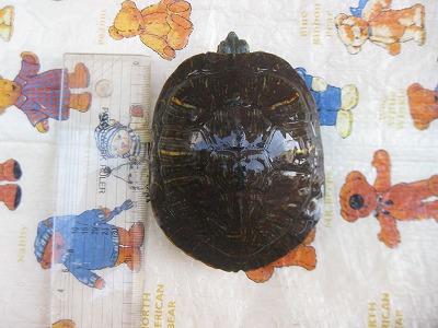 f:id:animal_protections:20120402224207j:image