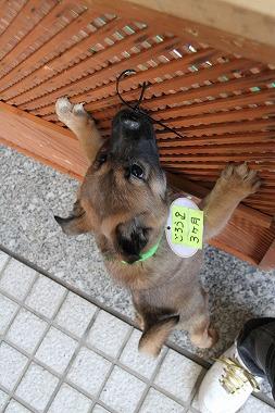 f:id:animal_protections:20120410212613j:image