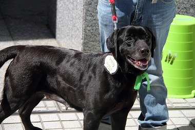 f:id:animal_protections:20120410212620j:image