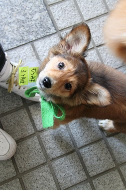 f:id:animal_protections:20120412222316j:image