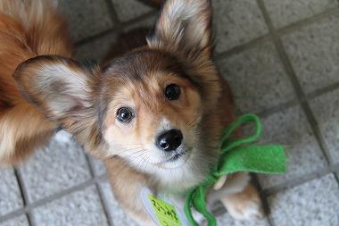 f:id:animal_protections:20120412222317j:image