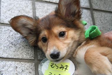 f:id:animal_protections:20120412222319j:image