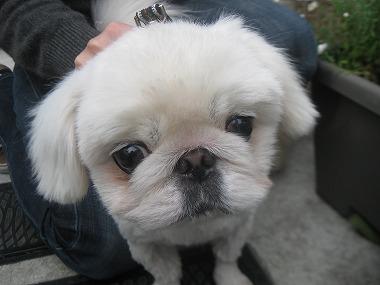 f:id:animal_protections:20120416204706j:image