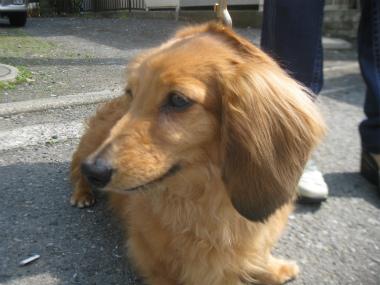 f:id:animal_protections:20120421192654j:image