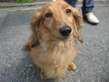 f:id:animal_protections:20120421192655j:image