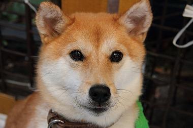 f:id:animal_protections:20120424230545j:image