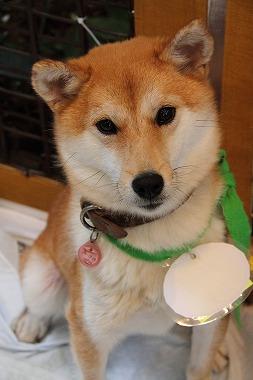 f:id:animal_protections:20120424230546j:image