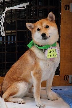f:id:animal_protections:20120424230547j:image