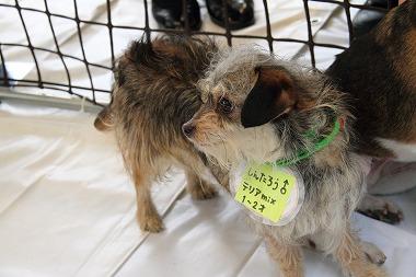 f:id:animal_protections:20120430214749j:image