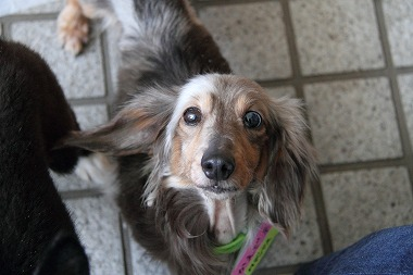 f:id:animal_protections:20120515004923j:image