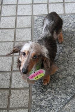 f:id:animal_protections:20120515004924j:image