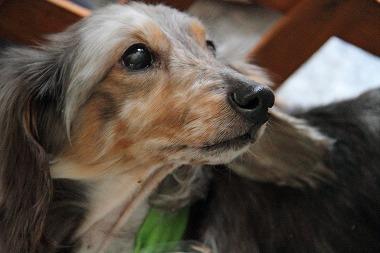 f:id:animal_protections:20120515004925j:image