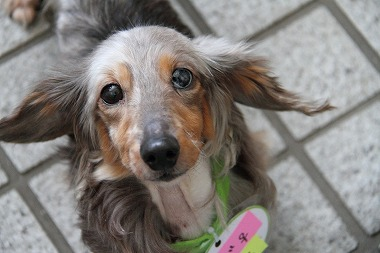 f:id:animal_protections:20120515004926j:image