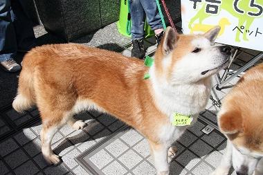 f:id:animal_protections:20120701222855j:image