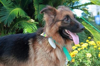 f:id:animal_protections:20120823223733j:image