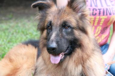 f:id:animal_protections:20121123140544j:image