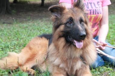 f:id:animal_protections:20121123140545j:image