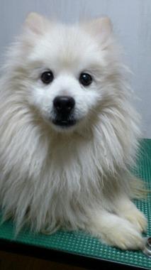 f:id:animal_protections:20130216234032j:image
