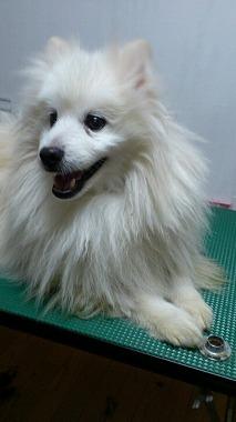 f:id:animal_protections:20130216234033j:image