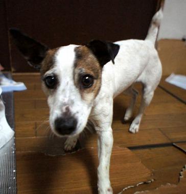 f:id:animal_protections:20130218155924j:image