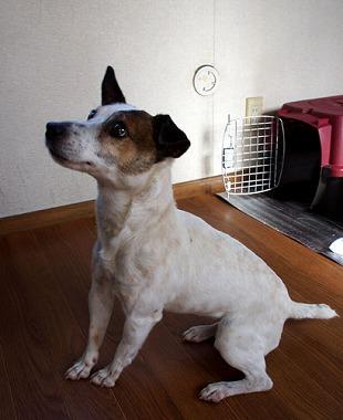 f:id:animal_protections:20130218155927j:image
