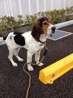 f:id:animal_protections:20130317205604j:image