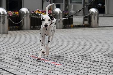 f:id:animal_protections:20130327232427j:image