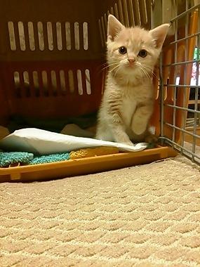 f:id:animal_protections:20130403234256j:image