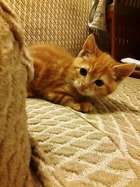 f:id:animal_protections:20130403234301j:image