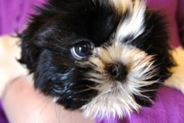 f:id:animal_protections:20130409142140p:image