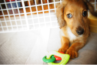 f:id:animal_protections:20130430220526p:image