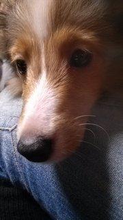 f:id:animal_protections:20130826114800j:image