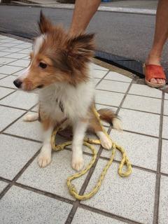 f:id:animal_protections:20130826114802j:image