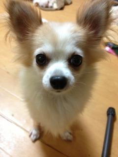 f:id:animal_protections:20130909145236j:image