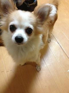f:id:animal_protections:20130909145237j:image