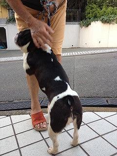 f:id:animal_protections:20131003213559j:image