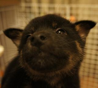 f:id:animal_protections:20131210214205j:image