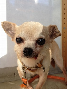 f:id:animal_protections:20131222230701j:image