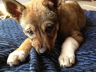 f:id:animal_protections:20140405200607j:image