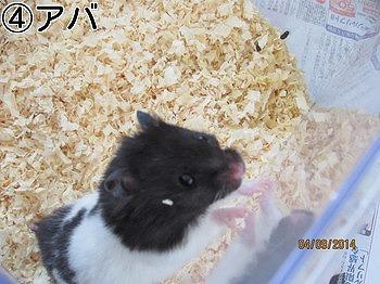 f:id:animal_protections:20140409230254j:image