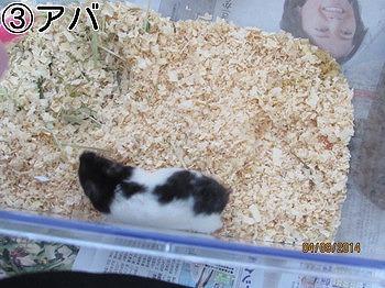 f:id:animal_protections:20140409230255j:image