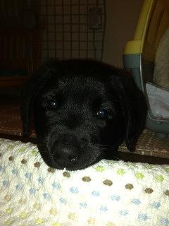 f:id:animal_protections:20140502141403j:image