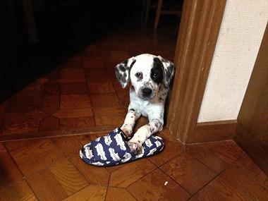 f:id:animal_protections:20140502143526j:image