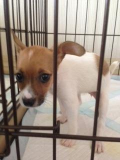 f:id:animal_protections:20140715105333j:image
