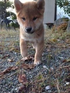 f:id:animal_protections:20141201155623j:image