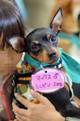 f:id:animal_protections:20141201163617j:image